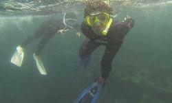 大島海---500